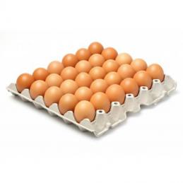 Plateau d'œufs x 30