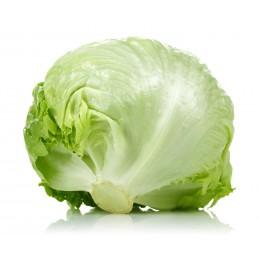 Salade Iceberg 10P